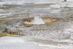 Geyser in yellowstone Royalty Free Stock Photos