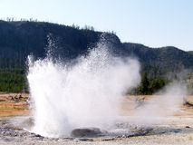 Geyser in Yellowstone stock photography