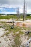 Geyser in Yellowstone Royalty Free Stock Photo
