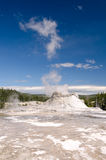 Geyser in Yellowstone Royalty Free Stock Photo