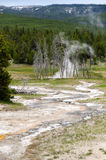 Geyser in Yellowstone Stock Images