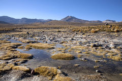 Geysers. Del tatio on Andes, Chile Stock Photos