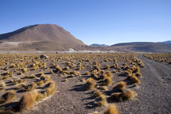 Geysers. Del tatio on Andes, Chile Royalty Free Stock Image
