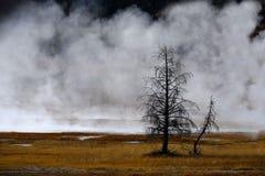 Geysers e vapor que aumentam no parque nacional de Yellowstone imagens de stock royalty free