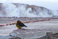 Geysers för hålla ögonen på för fågel vid morgon royaltyfria foton