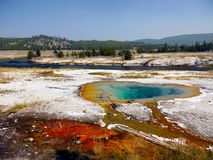 Geysers Hot Springs Yellowstone National Park Wyoming Royalty Free Stock Image