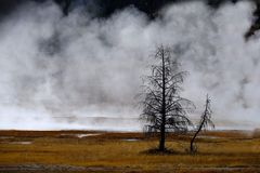 Geysers and Steam Rising in Yellowstone National Park royalty free stock images