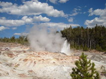 geysersteamboat Arkivfoton