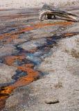 Geysir-Abfluss mit totem Baum stockfotografie