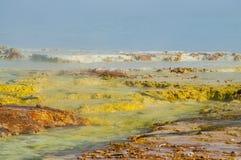 Geysir-Bakterien-Nahaufnahme Stockfoto