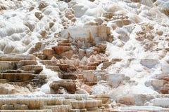 Geysir bei Mammoth Hot Springs. Stockbilder