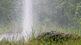 Geysir hinter dem Gras stock footage