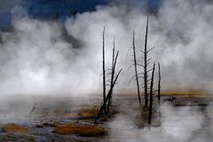 Geysire und Dampf, die in Yellowstone Nationalpark steigen Stockfoto