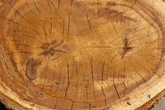 Gezaagd van de boomstam van een boom Stock Foto