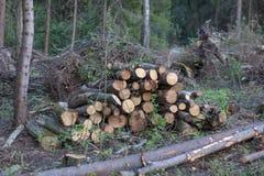 Gezaagde bomen in het hout stock foto