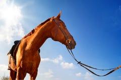 Gezadeld Paard Royalty-vrije Stock Afbeeldingen