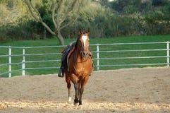 Gezadeld paard stock afbeeldingen