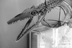 Gezahnter Dinosaurier Stockfotografie