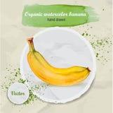 Gezeichnete Banane des Vektoraquarells Hand Stockfotos