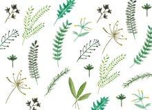 Gezeichnete Blätter des Aquarells Hand Stockbilder