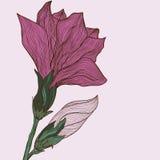 Gezeichnete Blume des Vektors Hand in der Weinleseart lizenzfreie abbildung
