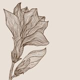 Gezeichnete Blume des Vektors Hand in der Weinleseart Stockfotografie