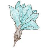 Gezeichnete Blume des Vektors Hand in der Weinleseart stock abbildung