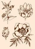 Gezeichnete Blumen der Weinlese Hand Lizenzfreie Stockfotografie