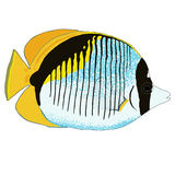 Gezeichnete Butterflyfish-Vektor-Illustration Stockbild
