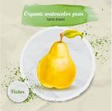 Gezeichnete frische organische Birne des Vektoraquarells Hand Lizenzfreies Stockbild