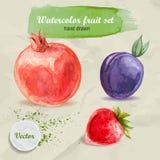 Gezeichnete Frucht des Aquarells Hand eingestellt auf Papier Roter Granatapfel, Pflaume und Erdbeere Stockfotos