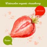 Gezeichnete halbe Erdbeere des Aquarells Hand Lizenzfreie Stockbilder