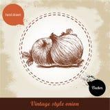 Gezeichnete Illustration der Zwiebel Hand Retro- Hintergrund der Weinlese mit Hand gezeichneten Skizzenzwiebeln Stockfotografie