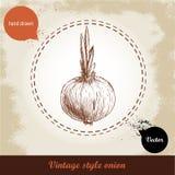 Gezeichnete Illustration der Zwiebel Hand Retro- Hintergrund der Weinlese mit Hand gezeichneter Skizzenzwiebel Lizenzfreie Stockfotografie