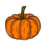 Gezeichnete Illustration des Herbstkürbises bunte Hand Ikonenlineare Gemüsezeichnung Stockfotos