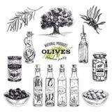 Gezeichnete Illustration des Vektors Hand mit Oliven und Lizenzfreies Stockfoto