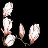 Gezeichnete Magnolie des Vektors Hand blüht Rahmen Stockfotos