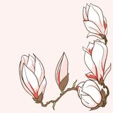 Gezeichnete Magnolie des Vektors Hand blüht Rahmen Lizenzfreie Stockfotografie