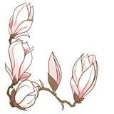 Gezeichnete Magnolie des Vektors Hand blüht Rahmen Stockbilder