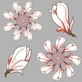 Gezeichnete Magnolie des Vektors Hand blüht ringsum Vignette Stockfoto