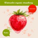 Gezeichnete rote Erdbeere des Aquarells Hand Stockbilder