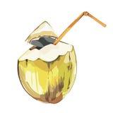 Gezeichnete Skizze der Vektorkokosnuß Hand Tropische Lebensmittelillustration des Aquarellvektors Getrennt auf weißem Hintergrund Lizenzfreie Stockbilder