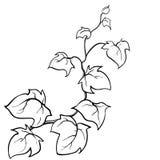 Gezeichnete Skizze des Vektors Hand - Efeu. Stockbild