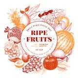 Gezeichnete Vektorillustration der Früchte und der Beeren Hand Retro- graviertes Artrahmendesign Sein kann Gebrauch für Menü, Auf Stockbild