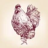 Gezeichnete Vektorillustration der Hühnerweinlese Hand Lizenzfreie Stockfotografie