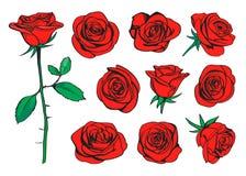 Gezeichneter Farbsatz der roten Rosen Hand Vektor Stock Abbildung