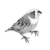 Gezeichneter kleiner Vogel des Vektors abstrakte Hand stockfoto