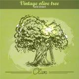 Gezeichneter Olivenbaum der Weinlese Hand Stockbild