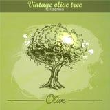 Gezeichneter Olivenbaum der Weinlese Hand Stockbilder