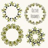 Gezeichneter Satz der Olivenrahmen Hand Vektoraufkleber-Designsammlung stock abbildung